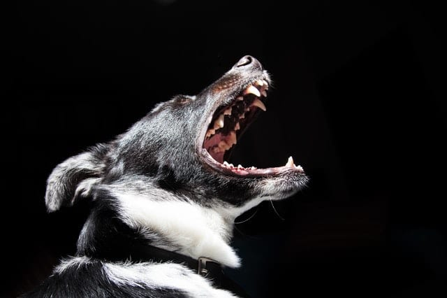 This if a dog picture for our dog bite attorney blog post